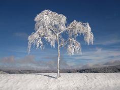 https://pixabay.com/pt/inverno-de-neve-abetos-natal-frio-1675197/
