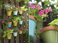 Vertical Gardening on Fence: A brilliant idea to expand a tiny garden...