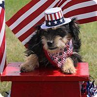 Adopt A Pet :: Taia - Carrollton, TX