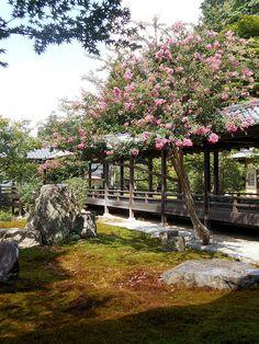Zen garden | da Marco Guada