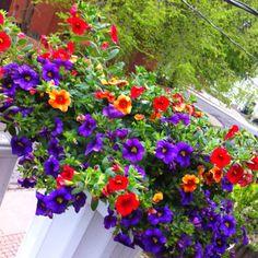Last summer's patio flowers! Miss them.