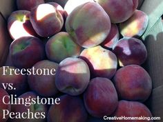 Freestone vs. clingstone peaches. Do you know which are better for baking or canning?