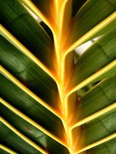 Detail listu palmy, vypadá zajímavě.
