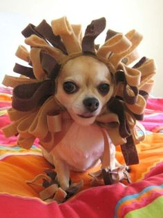 Lion Costume  Pet Dog Cat Halloween Costume by ilickyou on Etsy, $35.00