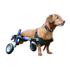 Adjustable dog wheelchair on WellDoneStuff.com
