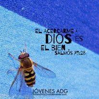 """""""El acercarme a Dios es el bien"""" Salmos 73:28 #AmaADiosGrandemente #LGGEspañol #LGG #Devocional #Estudiobiblicoenlinea #Estudiobiblicoparamujeres #Dios #ComunidadADG #JovenesADG"""