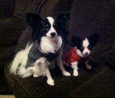 Neeko & Jasper