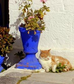Cat Enjoying the Sun ..on a winter's afternoon in Hydra Island / by RobW_ via Flickr