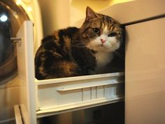 Maru! i think:p he opens and closes drawers by himself. cutie.