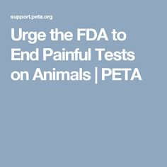 Urge the FDA to End Painful Tests on Animals | PETA