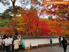 My First Japan Trip! Osaka, Kyoto and Nara Japan Travel Itinerary   Asia Travel Bug's Travel Blog