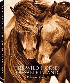 The Wild Horses of Sable Island by Roberto Dutesco