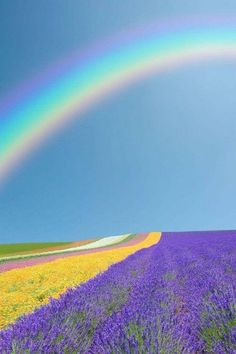 Rainbow over lavender