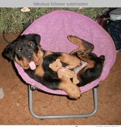 funny rottweiler puppy pictures | Zoe Fans Blog