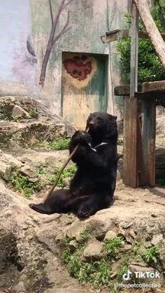 Funny Animal Jokes, Funny Animal Videos, Cute Funny Animals, Animal Memes, Cute Baby Animals, Funny Cute, Animals And Pets, Animal Magic, My Animal