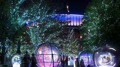 (Tokyo dome illumination) 東京ドームシティ ウィンターイルミネーション