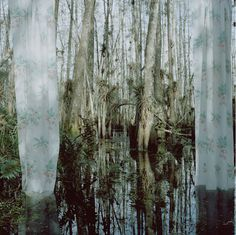 It's Nice That : Strange windows into the wilderness from photographer Rebecca Reeve