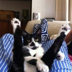 LOL!  What a crazy cat!