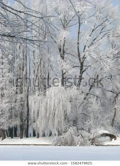 Park Winter Landscape Frozen White Fairy Stock Photo (Edit Now) 1582479925 Winter Landscape, Photo Editing, Royalty Free Stock Photos, Frozen, Fairy, Illustration, Photography, Outdoor, Editing Photos
