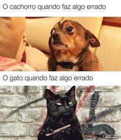 Gatos vao dominar o mundo Animals And Pets, Funny Animals, Cute Animals, Cool Pets, Cute Dogs, Best Memes, Funny Memes, Sao Memes, Otaku Meme