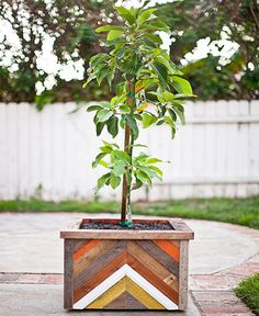 Plants + Animals >> Fruit tree in a hand made recycled wood planter box. Pflanzen + Tiere >> O Diy Wood Planters, Wood Planter Box, Recycled Planters, Outdoor Planters, Outdoor Projects, Diy Projects, Outdoor Decor, Pot Jardin, Diy Plant Stand