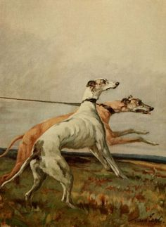 Maud Alice Earl was an eminent British-American canine painter. Her works are much enjoyed by dog enthusiasts and also accurately record many breeds.