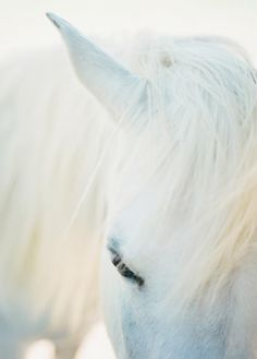 Beautiful white horse - now just need the knight ...........click here to find out more http://googydog.com