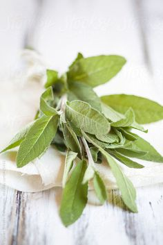 Bouquet of Sage (Salvia officinalis) , on piece of cloth