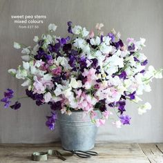The Real Flower Company scented roses & sweet peas - From Britain with Love Sweet Pea Wedding Flowers, Sweet Pea Flowers, All Flowers, Spring Flowers, Beautiful Flowers, Sweet Pea Bouquet, Home Flower Arrangements, Growing Sweet Peas, Virtual Flowers