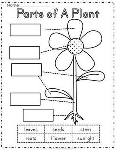 Teaching in Progress: Teacher Appreciation Freebies Roundup 1st Grade Worksheets, Science Worksheets, Science Lessons, Worksheets For Kids, Parts Of A Flower, Parts Of A Plant, Kindergarten Lessons, Kindergarten Worksheets, Preschool Science