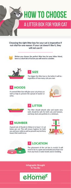 Infographic - How to Choose a Litter Box for Your Cat