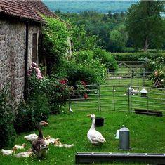 Farmhouse Garden, Garden Cottage, French Farmhouse, Backyard Fences, Backyard Landscaping, Backyard Greenhouse, Landscaping Design, Amazing Gardens, Beautiful Gardens