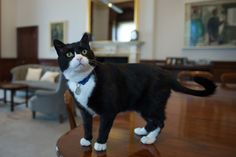 This is Palmerston, the Foreign Office's new cat. He is the department's official chief mouser. | We Met The New Foreign Office Cat And Asked Him Five Important Questions