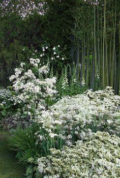 Japanese-inspired white garden