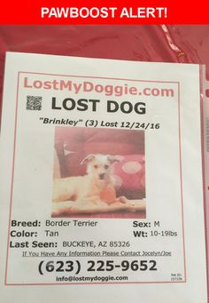 Please spread the word! Brinkley was last seen in Buckeye, AZ 85326.  Description: Brinkley bares his teeth trying to smile his bottom right side tooth is moved forward his toe nails some are black and others are white his teeth are all crooked he barks for nothing and can seem quite forocious but is very loveable he licks the nose as kisses also likes to sniff your ears whants you to share your food with him likes tennis balls will chase and bring back but will not drop it tan colored with…