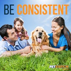 We are usually very clear when our dog does something wrong, but not so often we celebrate the good things. That is the reason we should not forget to be generous with our attention and affection when something great occur! This will reinforce good behavior and the dog will know he has been a good boy!