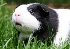 Cute Adorable Animals Photos in Hi-Res : theBERRY