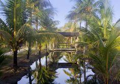 Palmenlaan  Plantage Visserszorg #Suriname