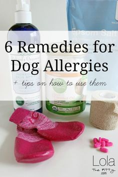 6 Remedies for Dog Allergies - www.lolathepitty.com