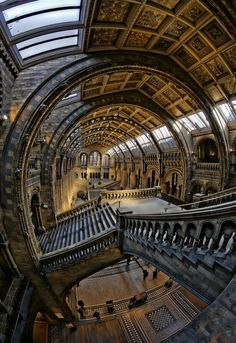 London's Museum of Natural History. Photo by Richard Harris.
