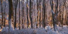 """Enlightened Forest - in the Ore Mountains. www.richterphotographie.de  Follow me on: <a href=""""http://www.facebook.com/pages/Tobias-Richter-Photography/163099510390531"""">Facebook</a> <a href=""""https://plus.google.com/#114267068337099978466/posts"""">Google+</a>"""