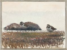 LARS JONSSON.1952, Sweden Wildlife Paintings, Wildlife Art, Bird Paintings, Bird Art, Animal Drawings, Art Pictures, Illustrators, Birds, Artist