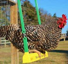 Fun activity to reduce coop boredom, Swinging motion is enjoyed by the chicken as well as the people who watch them swing, Safe and easy for all sizes of chicken and fowl, Easy installation and adjustment for any coop size Thanos Face, Chicken Swing, Dice Roller, Arcade Buttons, Chicken Toys, Red Licorice, Tape Dispenser, Eleven Stranger Things, Take My Money