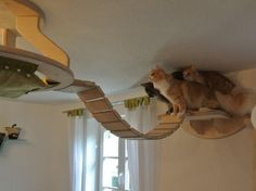 Cat climbing furniture. #cats #CatFurniture