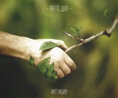 - ИНТУИЦИЯ - ФОТО ДНЯ: Мы с тобой одной крови! P.S. Берегите природу #фотодня #интуиция_фото #природа