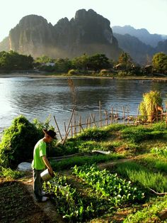 http://www.greeneratravel.com/ Organic Garden, Van Vieng Laos ... I can so do this here in NZ!! :))