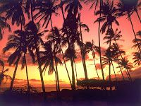 HD Tropical Paradise Wallpapers   knee-slapper