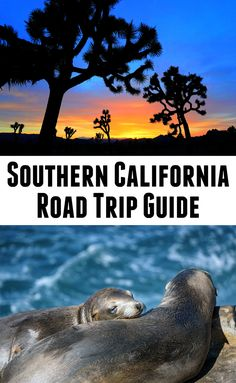Things to see and do on a road trip in Southern California -- including San Diego, Joshua Tree National Park, and San Luis Obispo. Click to see more or pin for later!