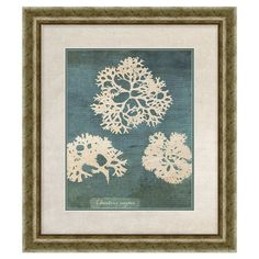 Framed print with an ocean plant motif.   Product: Framed printConstruction Material: Paper, glass and polystyr...
