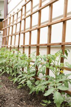 My Tips for Starting an Edible Garden - Lauren Conrad